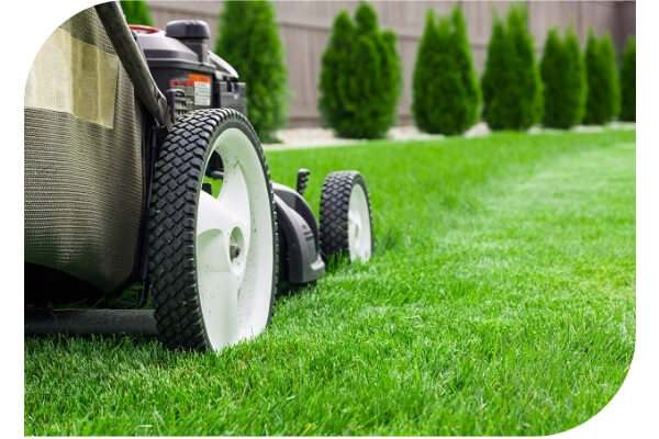 lawn mowing and care mackay-1
