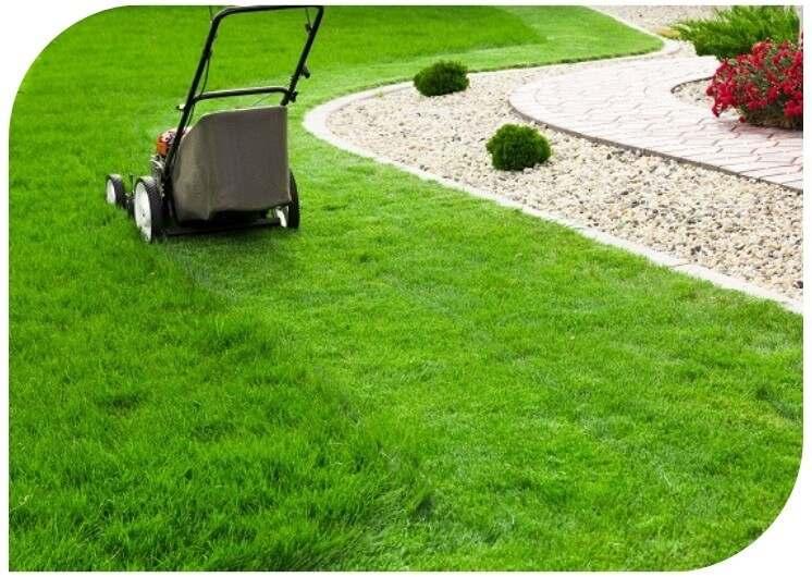 lewn mowing maintenance mackay